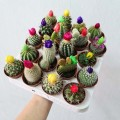 Assorted Holland Cactus with flower decoration