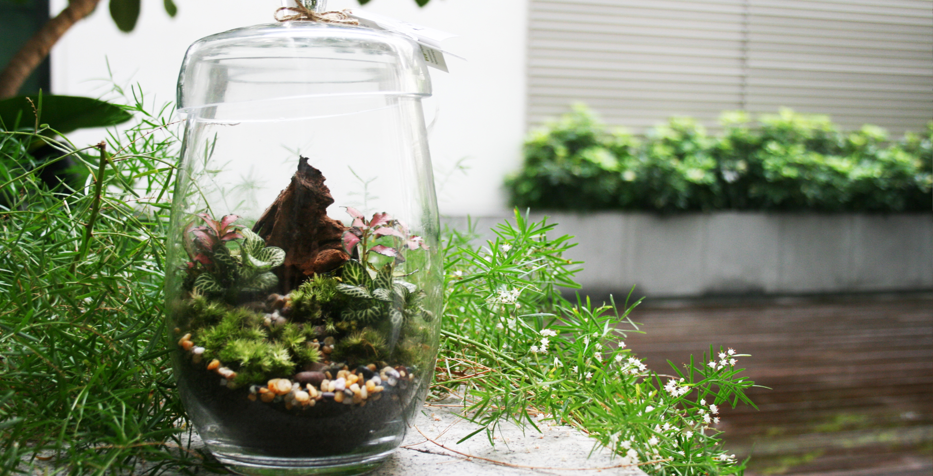 Banner-terrariums-greenwall-